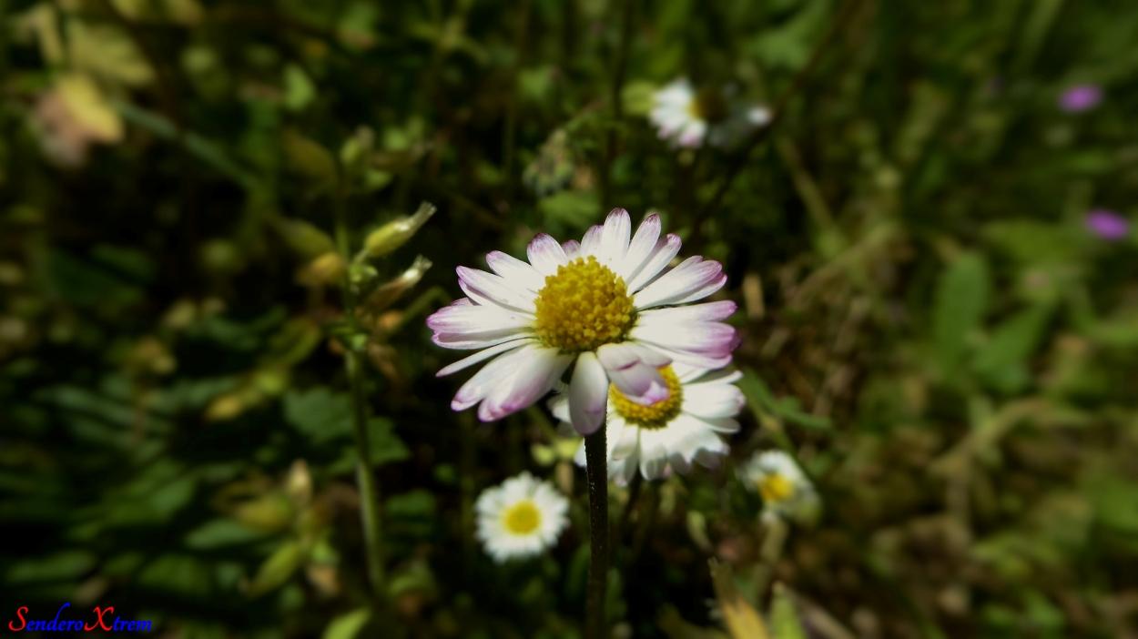 Primavera en el Magro