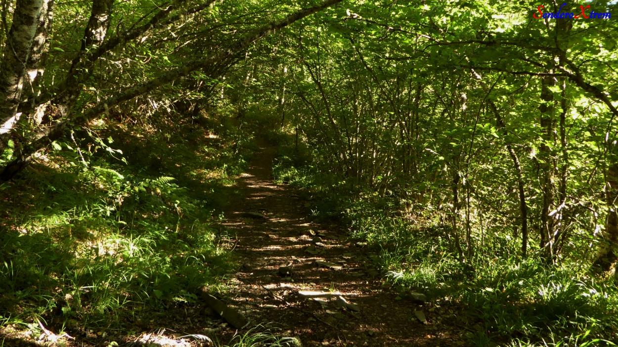 Una de las sendas que encontraremos