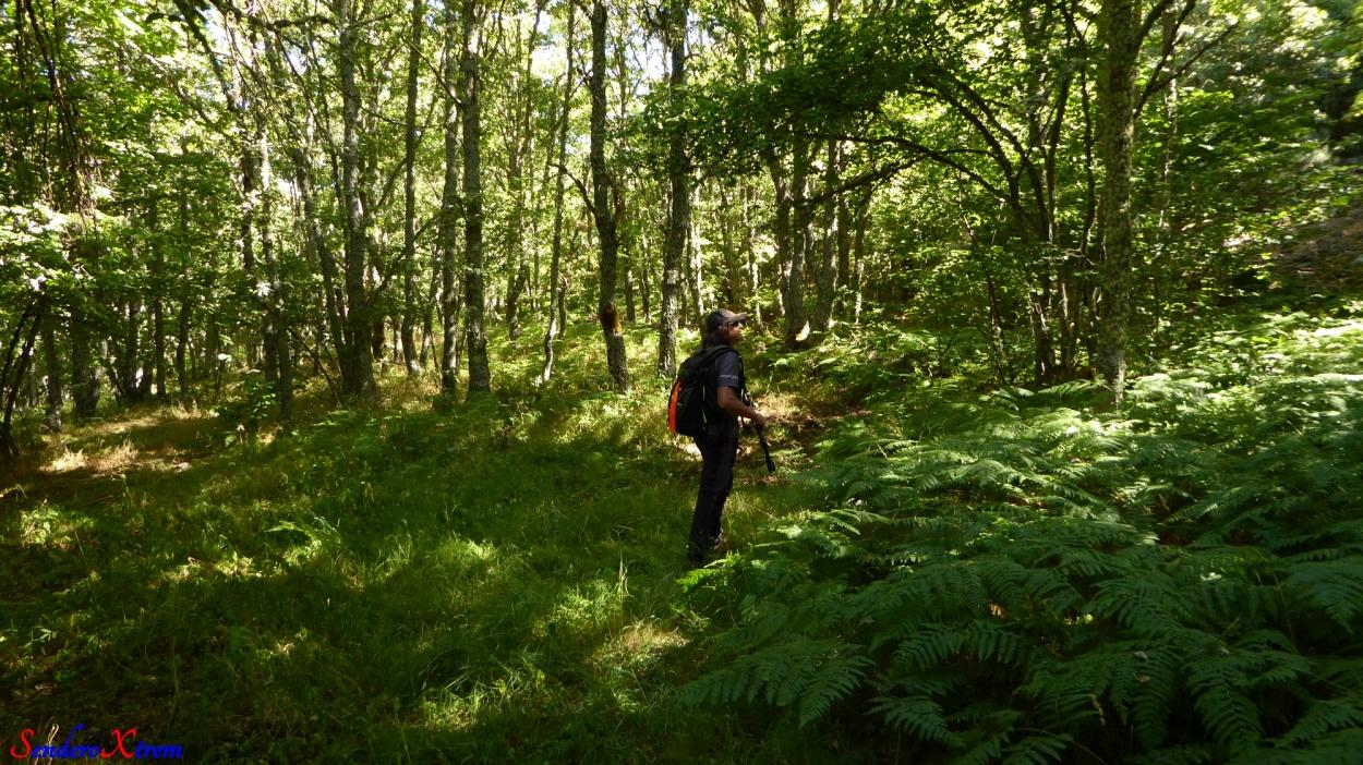 Bosque de Robles,Helechos,etc...